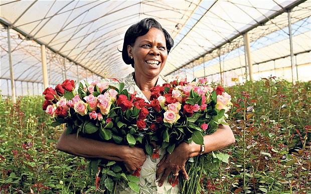 kenya-roses_2473809b
