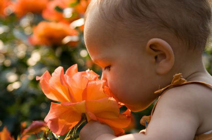 Cute baby girl smelling giant orange rose. With back light