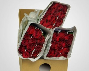 FloraHolland_starts_experimenting_with_auctioning_roses_in_a_box