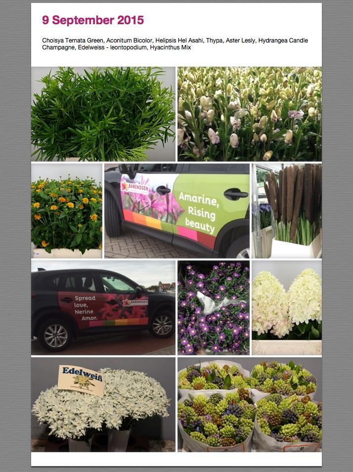 Foto's van 31 aug 2015 (1)