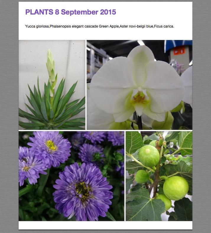 Foto's van 8 sep 2015 deel 2