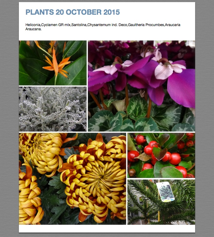 Pictures Plants