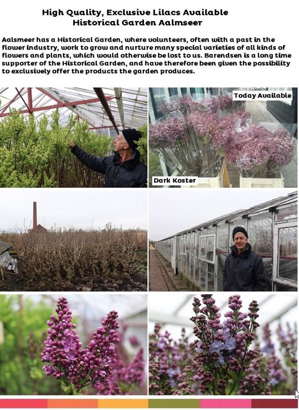 2016-03-17 14_37_57-Pictures Part 1 (from 3) Lilacs - Historical Garden Aalsmeer - erik@skonson.com