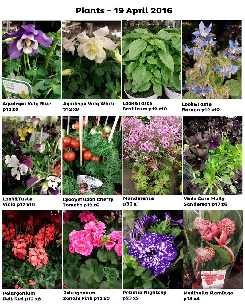 19 April 2016 Plants